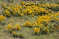Flora de Algarve de la primavera Fotografía de archivo libre de regalías