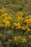 Flora de Algarve de la primavera Imágenes de archivo libres de regalías