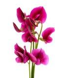 Flora de Gran Canaria imagens de stock