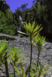 Flora de la cascada y de la montaña Foto de archivo libre de regalías
