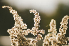 Flora de la primavera Fotos de archivo