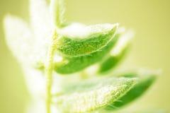 flora de Lapland ao viajar com uma lente macro fotos de stock