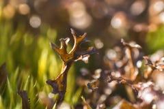 flora de Lapland ao viajar com uma lente macro fotografia de stock royalty free