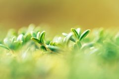 flora de Lapland ao viajar com uma lente macro foto de stock royalty free