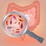 Flora de las bacterias del vector Imágenes de archivo libres de regalías