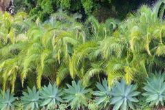 Flora de Madeira, Portugal foto de stock
