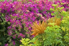 Flora de Madeira, Portugal imagem de stock royalty free
