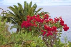 Flora de Madeira, Portugal imagens de stock