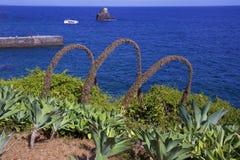 Flora de Madeira, Portugal imagem de stock