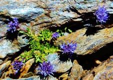Flora de Sierra Nevada fotografia de stock