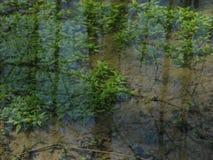 Flora, de weerspiegeling van aard in water aan green Stock Afbeeldingen