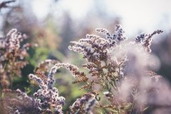 Flora del bosque, flores mullidas secas en el bosque con el bokeh y bl imagen de archivo libre de regalías