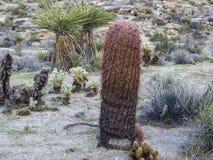 Flora del deserto Fotografie Stock Libere da Diritti