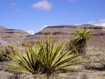 Flora del deserto Fotografie Stock