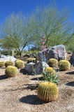 Flora del desierto Foto de archivo