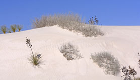 Flora del desierto en las dunas de arena Imágenes de archivo libres de regalías