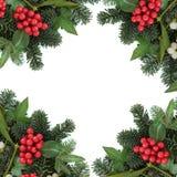 Flora del invierno Fotos de archivo libres de regalías