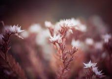 Flora del jardín Fotografía de archivo