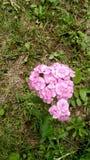 Flora del jardín de Michigan Foto de archivo libre de regalías