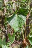 Flora del parco nazionale di Yasuni Fotografie Stock Libere da Diritti