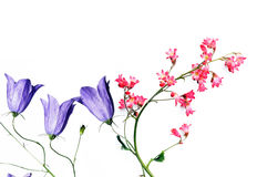 Flora del verano Imágenes de archivo libres de regalías