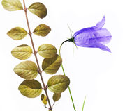 Flora del verano Fotografía de archivo libre de regalías