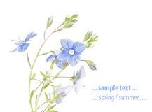 Flora del verano Fotografía de archivo