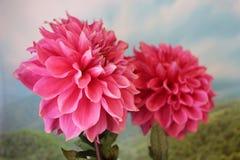 Flora del verano Imagen de archivo libre de regalías