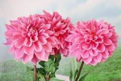 Flora del verano Imagenes de archivo