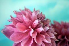 Flora del verano Fotos de archivo libres de regalías