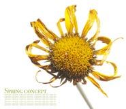 Flora del verano Fotos de archivo