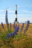 Flora delante del faro de Dungeness. Imagen de archivo
