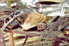 Flora dell'isola Praslin di Vallee de Mai Seyshelles del parco nazionale Fotografia Stock