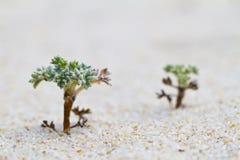 Flora della duna della spiaggia Fotografia Stock Libera da Diritti