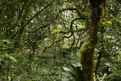 Flora della foresta pluviale fotografie stock libere da diritti