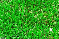 Flora della giungla amazzoniana Fotografie Stock Libere da Diritti