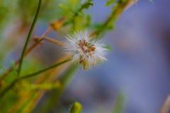 Flora della macchia mediterranea in puglia royalty free stock photos