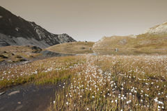 Flora della montagna accanto ad un piccolo lago nelle alpi Immagini Stock