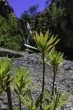 Flora della montagna e della cascata Fotografia Stock Libera da Diritti