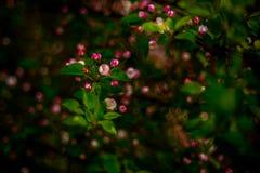 Flora della natura della primavera fotografie stock libere da diritti