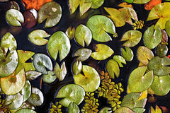 Flora della palude Immagini Stock Libere da Diritti