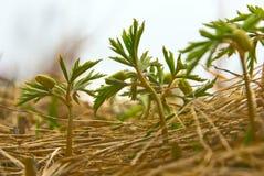 Flora della sorgente Fotografie Stock
