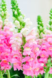 Flora dentellare Fotografia Stock