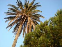 Flora der Azoren stockbilder
