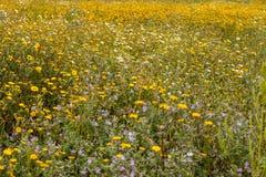 Flora di Algarve della primavera Fotografia Stock
