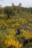 Flora di Algarve della primavera Fotografie Stock Libere da Diritti