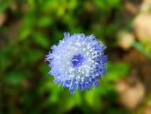 Flora di bellezza in natura Fotografia Stock Libera da Diritti