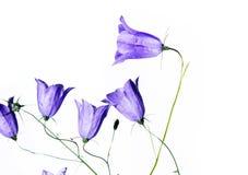 Flora di estate Immagini Stock Libere da Diritti