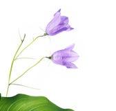 Flora di estate Fotografia Stock Libera da Diritti