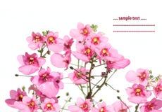 Flora di estate Fotografie Stock Libere da Diritti